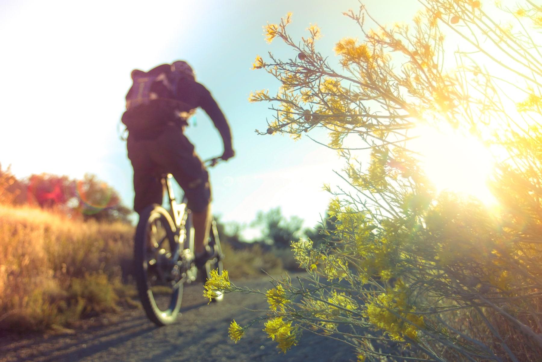 Hidden Diversity Trail Piney Trailhead